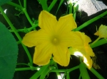 July flower