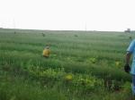 August weeding